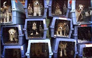 Puppy Mill-Housing7
