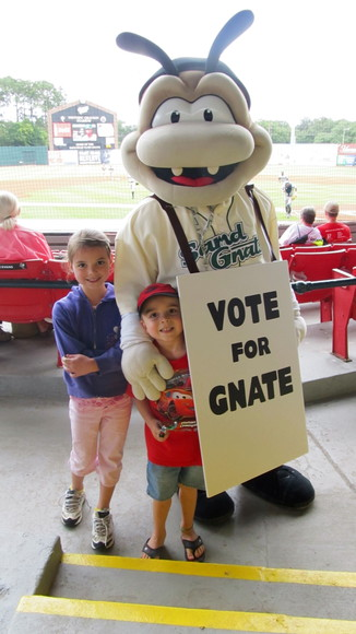 Savannah Sand Gnats